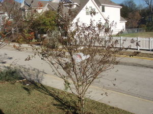 Picture_038_2